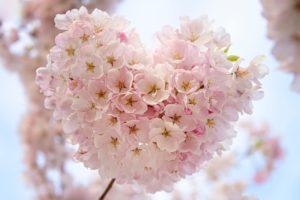 ハート型のサクラの花
